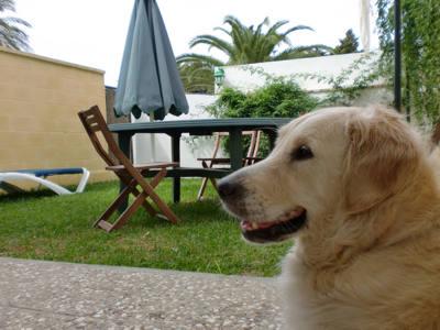 turismo-rural-con-perro