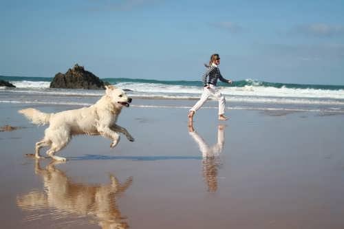 con-perros-en-la-playa