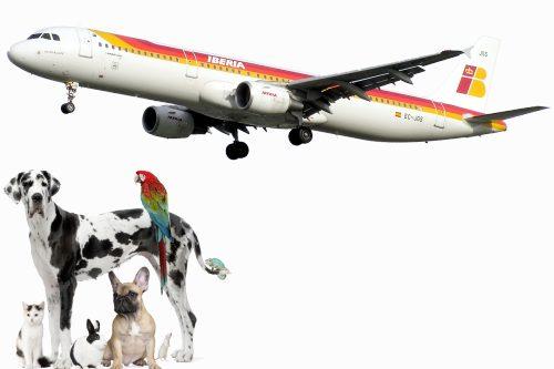 viajar-con-perro-en-avion
