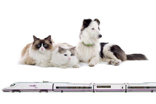 viajar-con-perro-en-tren