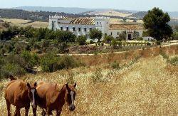 Casas rurales que admiten perros en cadiz viajar con tu mascota vacaciones cadiz con perro - Casas rurales que admiten perros en galicia ...