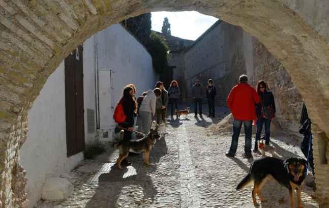 visita-guiada-a-granada-con-perros