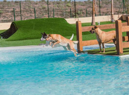 Mascots parque acuatico canino