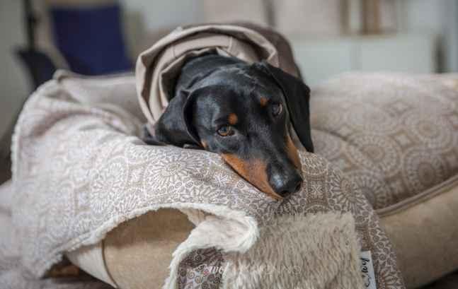 wof-cama-para-perro