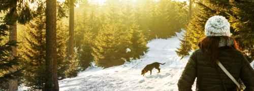 paisaje-con-perro-en-la-nieve