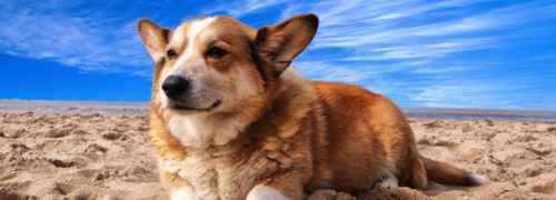 caminando-con-perros-en-la-playa