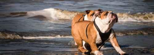 perros-jugando-en-la-playa